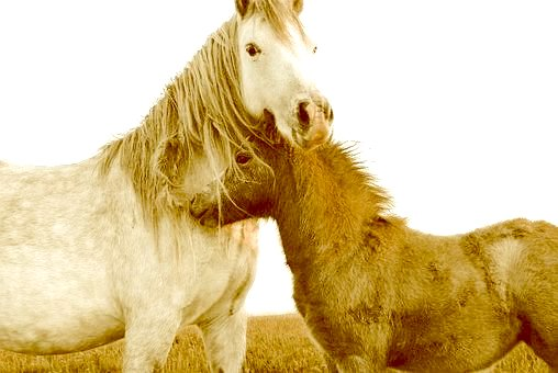 Horse Medicine: Giving & Receiving