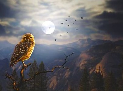 Medicine of the Owl