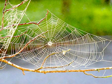 Spider Medicine: Weavers of Webs of Life